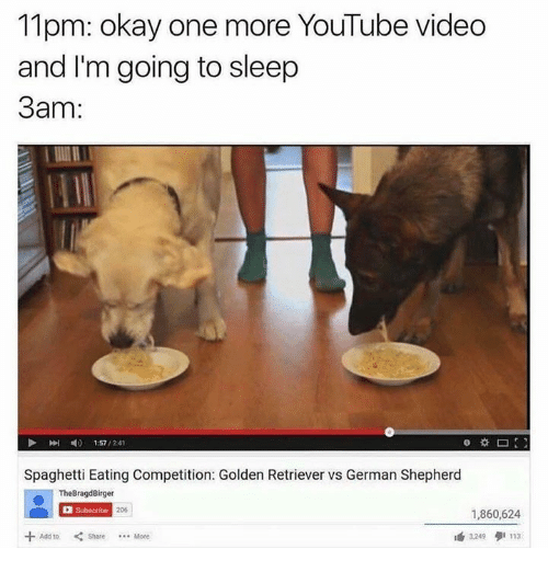 Dank, German Shepherd, and 🤖: 11pm: okay one more YouTube Video  and I'm going to sleep  3am:  1:57  /241  Spaghetti Eating Competition: Golden Retriever vs German Shepherd  The BragdBirger  Subscribe  1,860,624  324  9 113  Add to Share  Mote