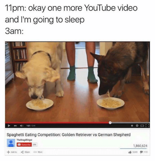 youtube.com, German Shepherd, and Golden Retriever: 11pm: okay one more YouTube Video  and I'm going to sleep  3am  157  Spaghetti Eating Competition: Golden Retriever vs German Shepherd  The ger  Subscribe  1,860,624  3249 9 113  Share Mote
