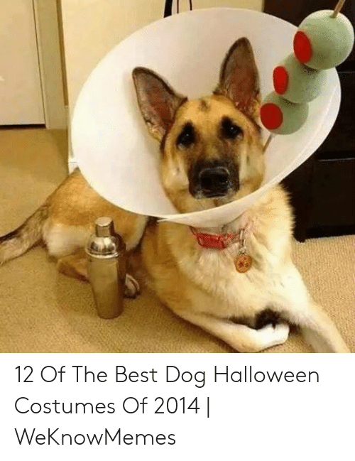 12 Of The Best Dog Halloween Costumes Of 2014 | WeKnowMemes ...