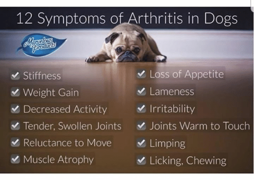 Dogs, Memes, and Arthritis: 12 Symptoms of Arthritis in Dogs  Stiffness  Weight Gain  Decreased Activity  Tender, Swollen Joints  Reluctance to Move  Muscle Atrophy  Loss of Appetite  Lameness  Irritability  D Joints Warm to Touch  Limping  Licking, Chewing