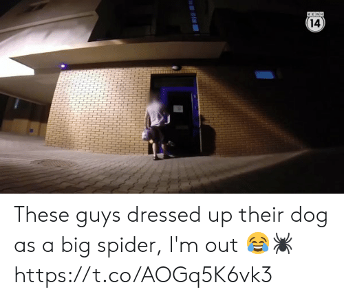 Funny, Spider, and Dog: 14  4  HHH These guys dressed up their dog as a big spider, I'm out 😂🕷 https://t.co/AOGq5K6vk3