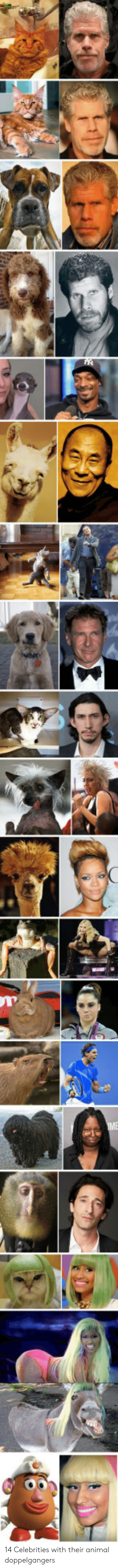 Animal, Celebrities, and Their: 14 Celebrities with their animal doppelgangers
