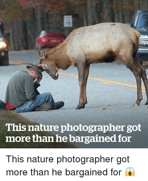 Nature, Got, and For: 15  This nature photographer got  more than he bargained for This nature photographer got more than he bargained for 😱