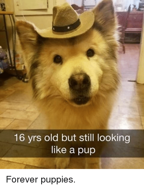 16 Yrs Old But Still Looking Like A Pup Forever Puppies Meme On Meme