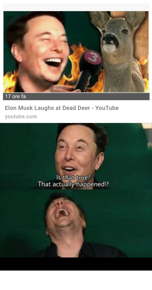 17 Ore Fa Elon Musk Laughs At Dead Deer Youtube Youtubecom S That