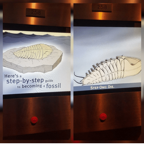 Fossil, Step, and One: 18  Here's a  step-by-step guide  to becoming a fossil  STEP ONE: DIE.