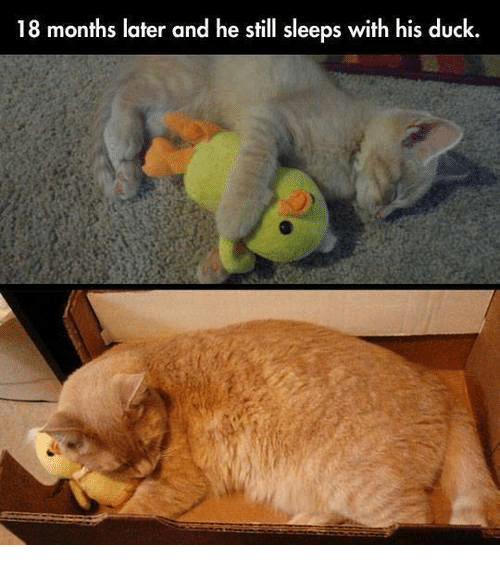 18 months later and he still sleeps with his duck 5684801 ✅ 25 best memes about duck duck memes,Duck Meme
