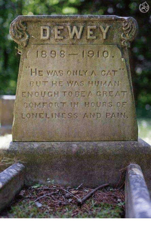 Memes, Loneliness, and Pain: 1898 1910  BUT HE WAS HUMAN  ENOUGH TOBEA GREAT  LONELINESS AND PAIN