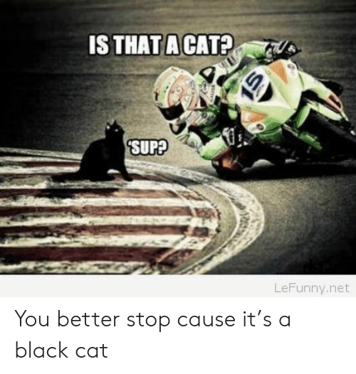 Black, Net, and Cat: 1S THAT A CAT?  SUPA  LeFunny.net You better stop cause it's a black cat