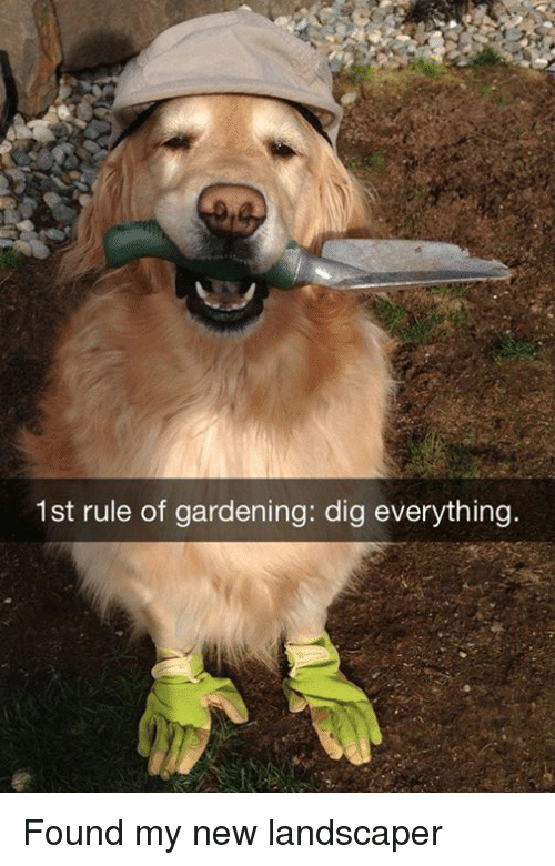 1st Rule Of Gardening Dig Everything Found My New Landscaper Dank