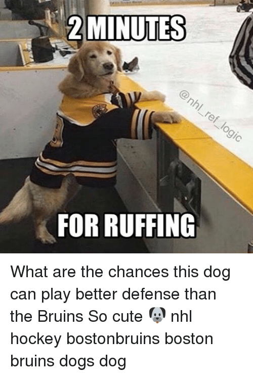 2 minutes for ruffing what are the chances this dog 14223301 ✅ 25 best memes about boston bruins boston bruins memes