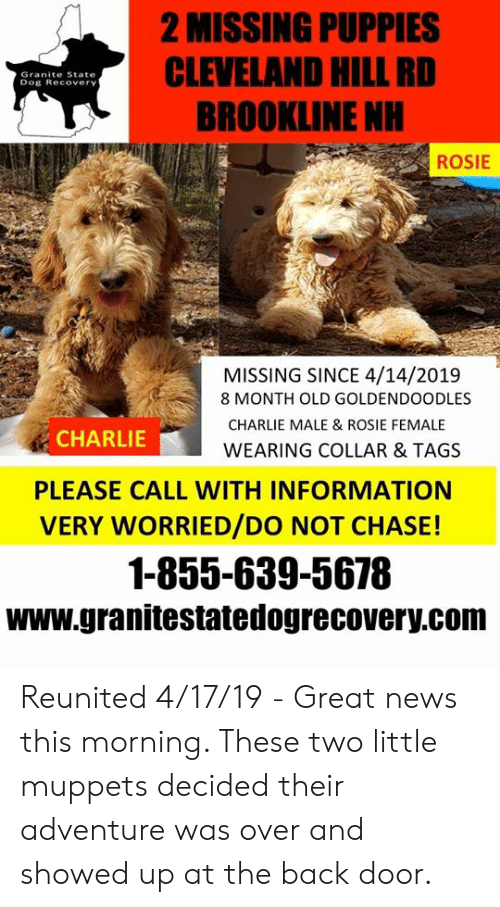 2 MISSING PUPPIES CLEVELAND HILL RD BROOKLINE NH Granite State Dog