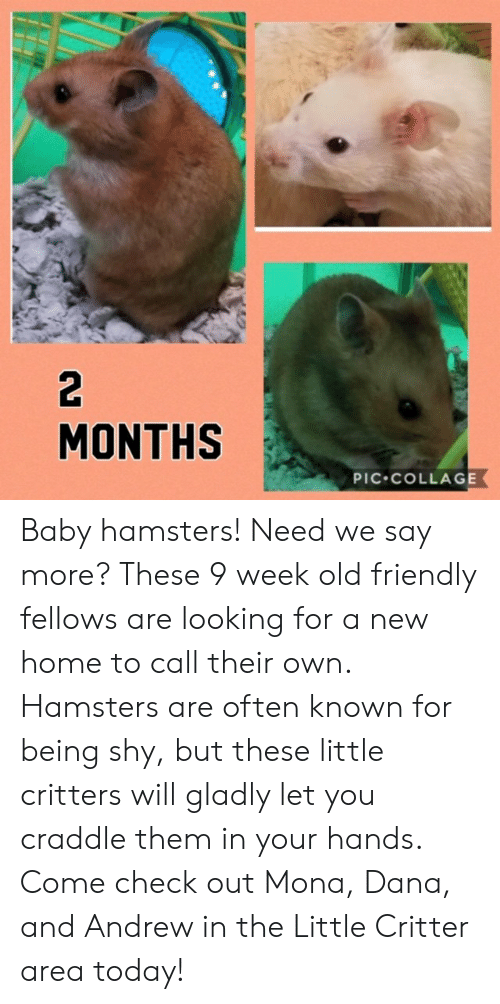 2 MONTHS PIC COLLAGE Baby Hamsters! Need We Say More? These
