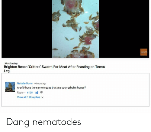 Beach, House, and Meat:  #2 on Trending  Brighton Beach Critters' Swarm For Meat After Feasting on Teen's  Leg  Natalie Duran 9 hours ago  Aren't those the same niggas that ate spongebob's house?  Reply-6128 lá 퀴  View all 118 replies v Dang nematodes