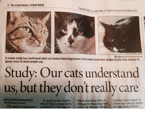 """Cats, Been, and Cat: 2 The Columbian YOUR WEEK  all  694-2312 to subscribe, or log on to www.columbian.com  ED SUBA JR./Akron Beacon Journal  A recent study has confirmed what cat owners have long known: Cats understand when spoken to, but they choose to  ignore most of what people say.  Study: Our cats understand  us, but they don't really care  By KATHY ANTONIOTII  Akron Beacon Journal  A study by two Univer-stress of moving them to bred and have evolved """"to  sity of Tokyo researchers, strange surroundings had follow their owner's orders,  The agony of unrequited published by Springer in no role in the outcome of but cats have not been,"""