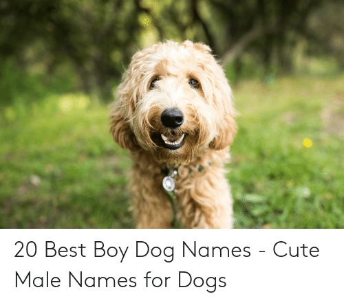 20 Best Boy Dog Names - Cute Male Names for Dogs | Cute Meme