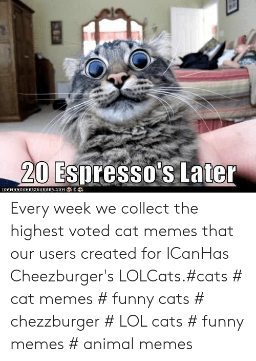 Cats, Funny, and Lol: 20 Espresso's Later  IGAN HAS CHEEZBURGER,00M Every week we collect the highest voted cat memes that our users created for ICanHas Cheezburger's LOLCats.#cats # cat memes # funny cats # chezzburger # LOL cats # funny memes # animal memes