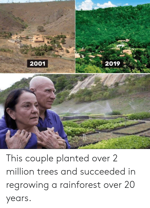 Trees, Rainforest, and This: 2001  2019 This couple planted over 2 million trees and succeeded in regrowing a rainforest over 20 years.