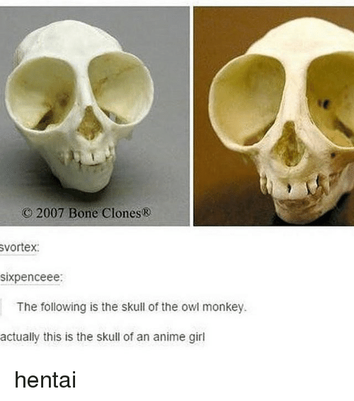 Anime, Hentai, and Memes: 2007 Bone Clones  vortex:  sixpenceee:  The following is the skull of the owl monkey  actually this is the skull of an anime girl hentai