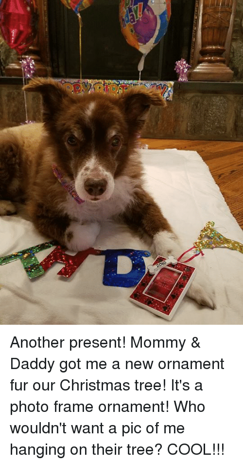 2016 Another Present! Mommy & Daddy Got Me a New Ornament Fur Our ...