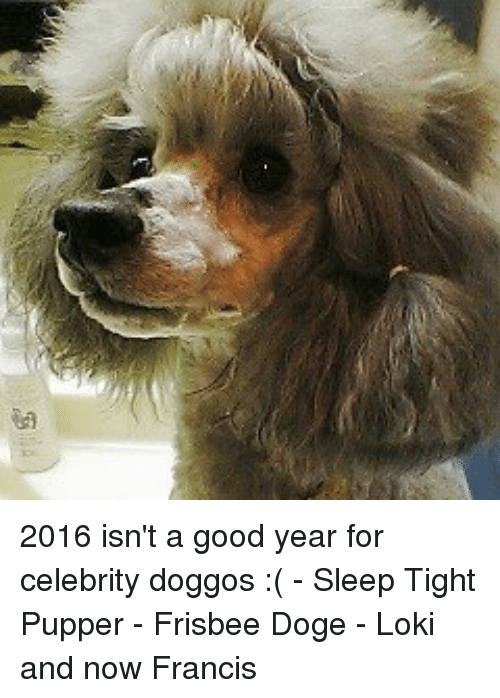 2016 isnt a good year for celebrity doggos 6103192 ✅ 25 best memes about frisbee doge frisbee doge memes
