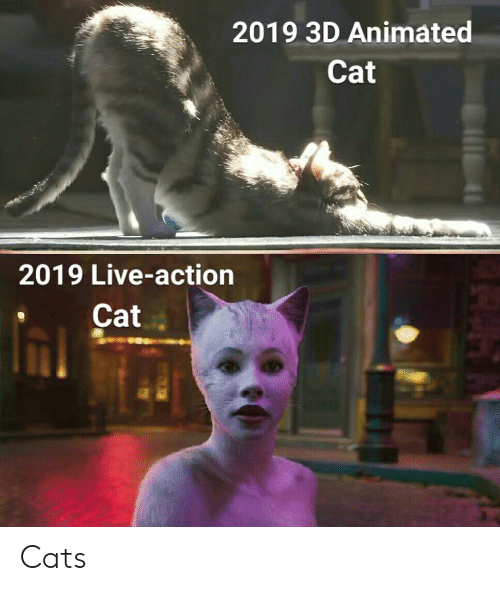 2019 3D Animated Cat 2019 Live,Action Cat Cats
