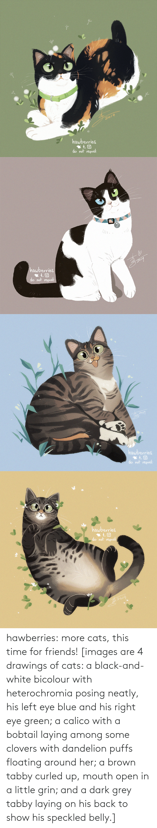 Cats, Friends, and Target: 2019  hawberries  do not repost   hawberries  do not repost   hawberries  do not repost   hawberries  do not repost hawberries: more cats, this time for friends! [images are 4 drawings of cats: a black-and-white bicolour with heterochromia posing neatly, his left eye blue and his right eye green; a calico with a bobtail laying among some clovers with dandelion puffs floating around her; a brown tabby curled up, mouth open in a little grin; and a dark grey tabby laying on his back to show his speckled belly.]