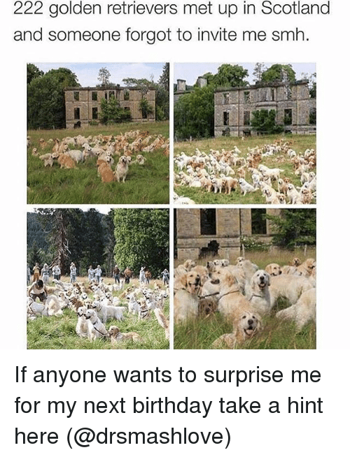 222 Golden Retrievers Met Up In Scotland And Someone Forgot To
