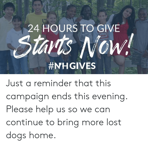 Dogs, Memes, and Lost: 24 HOURS TO GIVE  Starts Now!  Just a reminder that this campaign ends this evening. Please help us so we can continue to bring more lost dogs home.