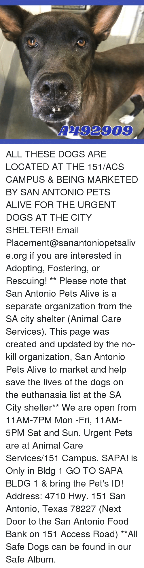 Alive, Dogs, and Food: 2792909 ALL THESE DOGS ARE LOCATED AT THE 151/ACS CAMPUS & BEING MARKETED BY SAN ANTONIO PETS ALIVE FOR THE URGENT DOGS AT THE CITY SHELTER!!  Email Placement@sanantoniopetsalive.org if you are interested in Adopting, Fostering, or Rescuing!                                                                                                                                                                                                                                                                                                                                                             ** Please note that San Antonio Pets Alive is a separate organization from the SA city shelter (Animal Care Services). This page was created and updated by the no-kill organization, San Antonio Pets Alive to market and help save the lives of the dogs on the euthanasia list at the SA City shelter**  We are open from 11AM-7PM Mon -Fri, 11AM-5PM Sat and Sun. Urgent Pets are at Animal Care Services/151 Campus. SAPA! is Only in Bldg 1 GO TO SAPA BLDG 1 & bring the Pet's ID! Address: 4710 Hwy. 151 San Antonio, Texas 78227 (Next Door to the San Antonio Food Bank on 151 Access Road) **All Safe Dogs can be found in our Safe Album.