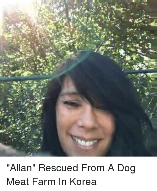 """Memes, Ups, and Farming: """"2pむ.  T  up """"Allan"""" Rescued From A Dog Meat Farm In Korea"""