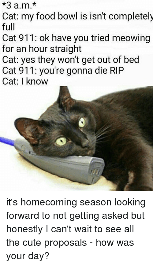 3 am cat my food bowl is isn 39 t completely full cat 911 ok have you tried meowing for an hour. Black Bedroom Furniture Sets. Home Design Ideas