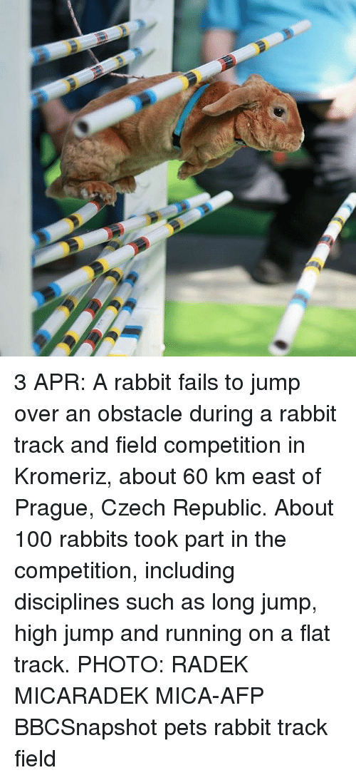 Anaconda, Memes, and Pets: 3 APR: A rabbit fails to jump over an obstacle during a rabbit track and field competition in Kromeriz, about 60 km east of Prague, Czech Republic. About 100 rabbits took part in the competition, including disciplines such as long jump, high jump and running on a flat track. PHOTO: RADEK MICARADEK MICA-AFP BBCSnapshot pets rabbit track field