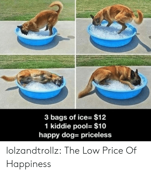 Tumblr, Blog, and Happy: 3 bags of ice- $12  1 kiddie pool- $10  happy dog- priceless lolzandtrollz:  The Low Price Of Happiness