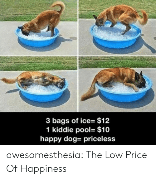 Tumblr, Blog, and Happy: 3 bags of ice- $12  1 kiddie pool- $10  happy dog- priceless awesomesthesia:  The Low Price Of Happiness