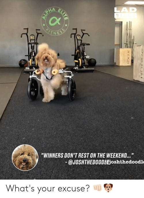 "Dank, The Weekend, and 🤖: 3  Cx  -1  ""WINNERS DON'T REST ON THE WEEKEND...  @JOSHTHEDO0DlEjoshthedoodle What's your excuse? 👊🏻🐶"