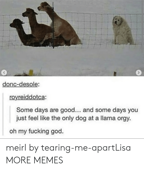 Dank, Fucking, and God: 3  donc-desole:  royreiddotca:  Some days are good... and some days you  just feel like the only dog at a llama orgy  oh my fucking god. meirl by tearing-me-apartLisa MORE MEMES