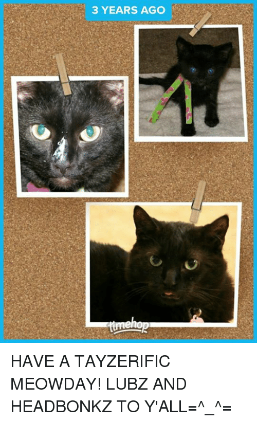 3 years ago have a tayzerific meowday lubz and headbonkz to y all
