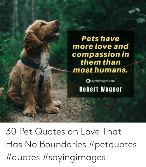 Love, Quotes, and Pet: 30 Pet Quotes on Love That Has No Boundaries #petquotes #quotes #sayingimages