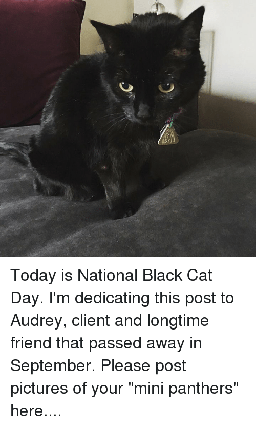 313 today is national black cat day im dedicating this 6870111 25 best black cat day memes yours memes, lovely memes, missed memes