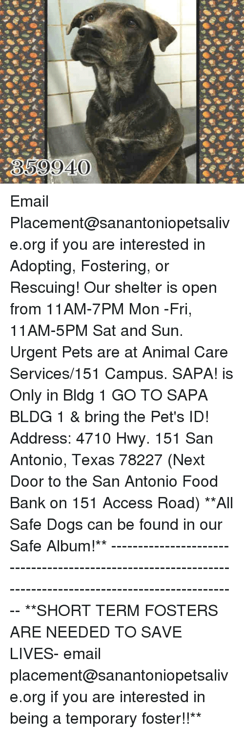 Dogs, Food, and Memes: 359940 Email Placement@sanantoniopetsalive.org if you are interested in Adopting, Fostering, or Rescuing!  Our shelter is open from 11AM-7PM Mon -Fri, 11AM-5PM Sat and Sun.  Urgent Pets are at Animal Care Services/151 Campus. SAPA! is Only in Bldg 1 GO TO SAPA BLDG 1 & bring the Pet's ID! Address: 4710 Hwy. 151 San Antonio, Texas 78227 (Next Door to the San Antonio Food Bank on 151 Access Road)  **All Safe Dogs can be found in our Safe Album!** ---------------------------------------------------------------------------------------------------------- **SHORT TERM FOSTERS ARE NEEDED TO SAVE LIVES- email placement@sanantoniopetsalive.org if you are interested in being a temporary foster!!**