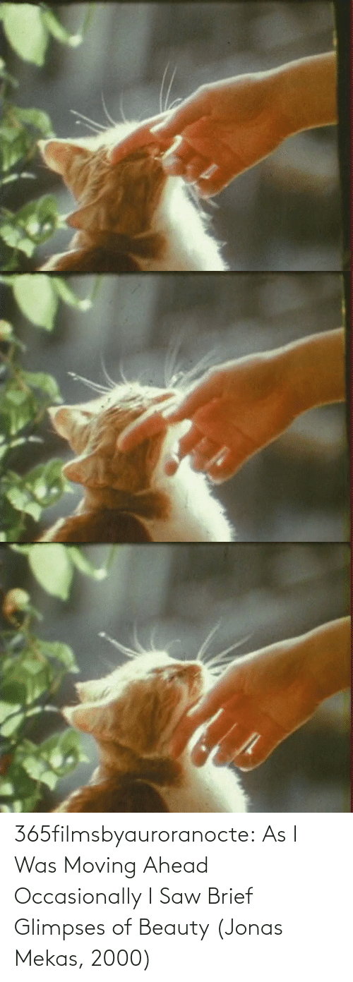 Saw, Tumblr, and Blog: 365filmsbyauroranocte:    As I Was Moving Ahead Occasionally I Saw Brief Glimpses of Beauty (Jonas Mekas, 2000)