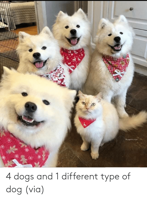 Aww, Dogs, and Reddit: 4 dogs and 1 different type of dog(via)