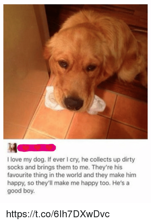 Love, Memes, and Dirty: 4  I love my dog. If ever I cry, he collects up dirty  socks and brings them to me. They're his  favourite thing in the world and they make him  happy, so they'll make me happy too. He's a  good boy. https://t.co/6Ih7DXwDvc