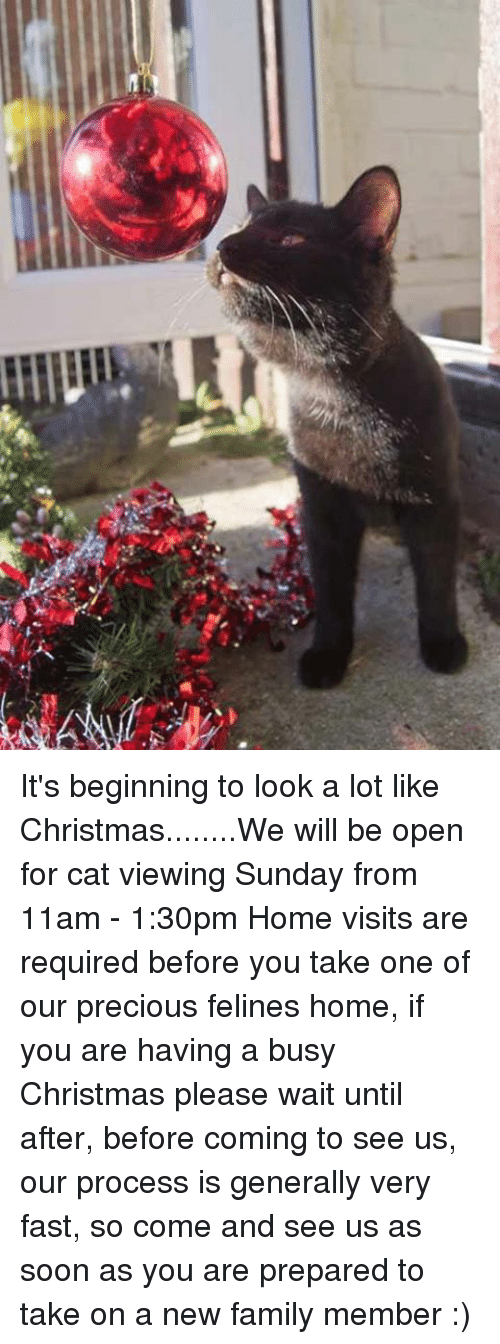 4 It\'s Beginning to Look a Lot Like ChristmasWe Will Be Open for Cat ...