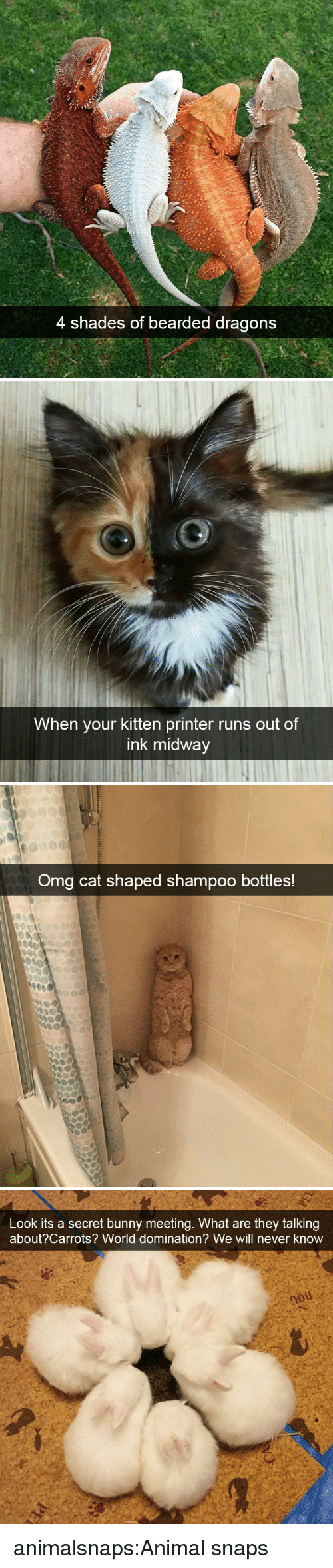 Omg, Tumblr, and Animal: 4 shades of bearded dragons   When your kitten printer runs out of  ink midway   Omg cat shaped shampoo bottles!   Look its a secret bunny meeting. What are they talking  about?Carrots? World domination? We will never know animalsnaps:Animal snaps