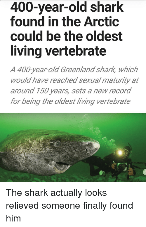Shark, Record, and Old: 400-year-old shark  found in the Arctic  could be the oldest  living vertebrate  A 400-year-old Greenland shark, which  would have reached sexual maturity at  around 150 years, sets a new record  for being the oldest living vertebrate The shark actually looks relieved someone finally found him