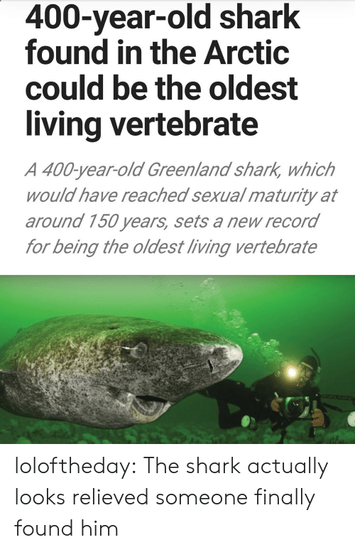 Tumblr, Shark, and Blog: 400-year-old shark  found in the Arctic  could be the oldest  living vertebrate  A 400-year-old Greenland shark, which  would have reached sexual maturity at  around 150 years, sets a new record  for being the oldest living vertebrate loloftheday:  The shark actually looks relieved someone finally found him