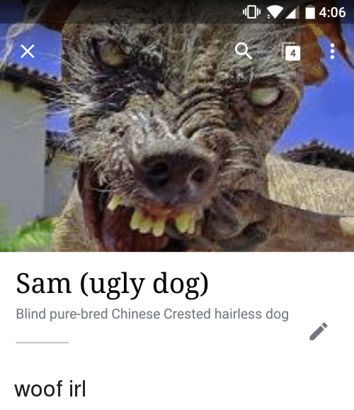 41 4 sam ugly dog blind pure bred chinese crested hairless 23941035 41 4 sam ugly dog blind pure bred chinese crested hairless dog