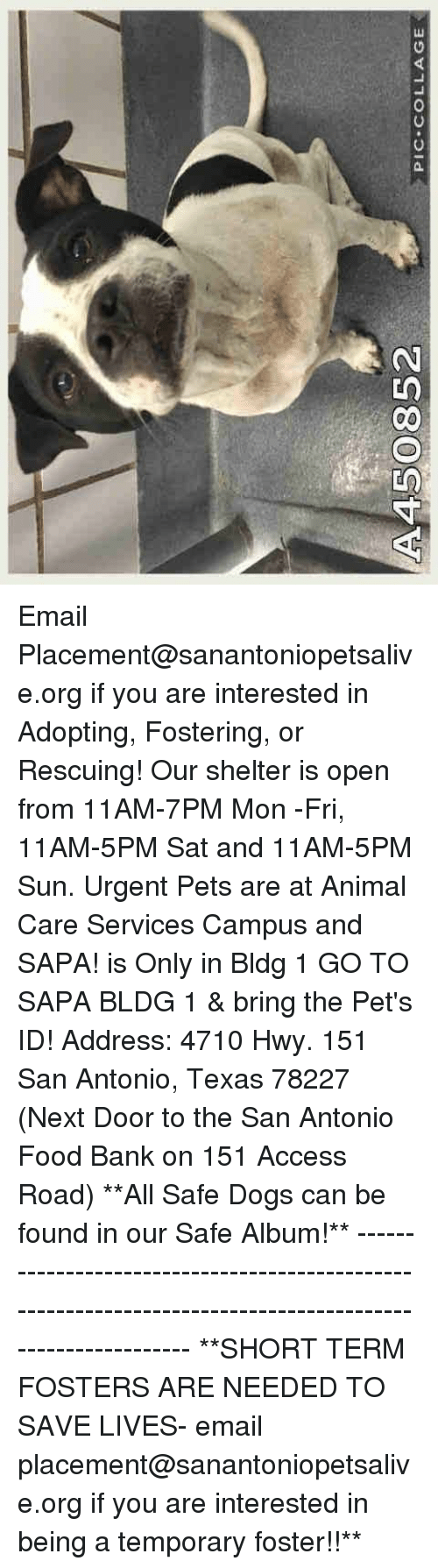 Dogs, Food, and Memes: 450852  PIC-COLLAGE Email Placement@sanantoniopetsalive.org if you are interested in Adopting, Fostering, or Rescuing!  Our shelter is open from 11AM-7PM Mon -Fri, 11AM-5PM Sat and 11AM-5PM Sun.  Urgent Pets are at Animal Care Services Campus and SAPA! is Only in Bldg 1 GO TO SAPA BLDG 1 & bring the Pet's ID! Address: 4710 Hwy. 151 San Antonio, Texas 78227 (Next Door to the San Antonio Food Bank on 151 Access Road)  **All Safe Dogs can be found in our Safe Album!** ---------------------------------------------------------------------------------------------------------- **SHORT TERM FOSTERS ARE NEEDED TO SAVE LIVES- email placement@sanantoniopetsalive.org if you are interested in being a temporary foster!!**
